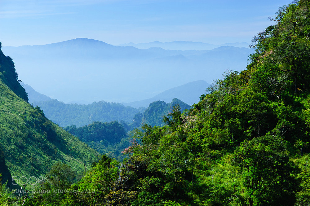 Photograph Natural  forest by real chi on 500px