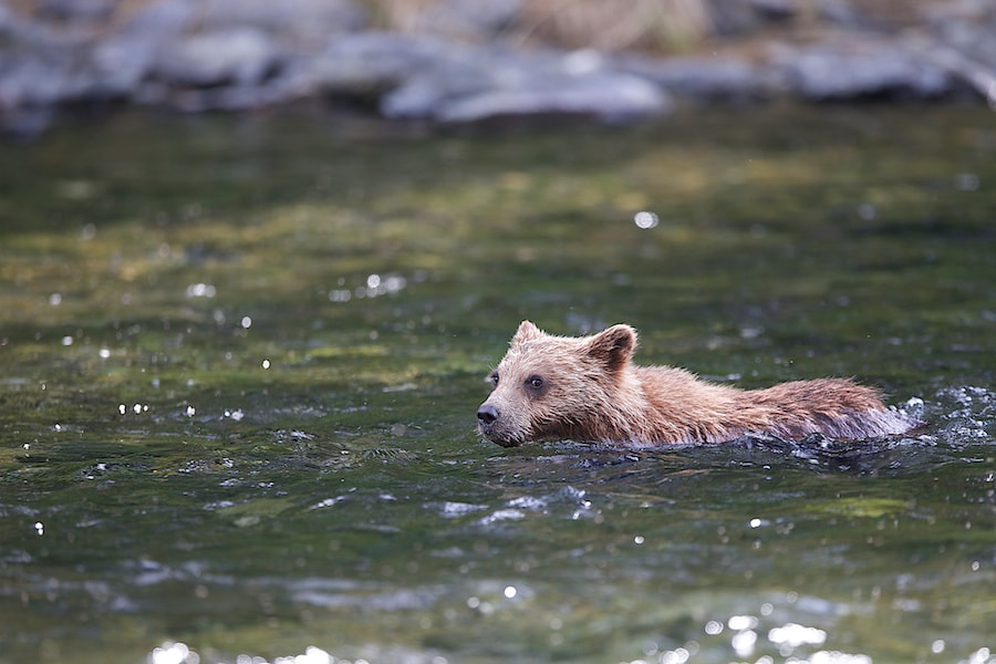 Photograph Swimming Backward by Buck Shreck on 500px