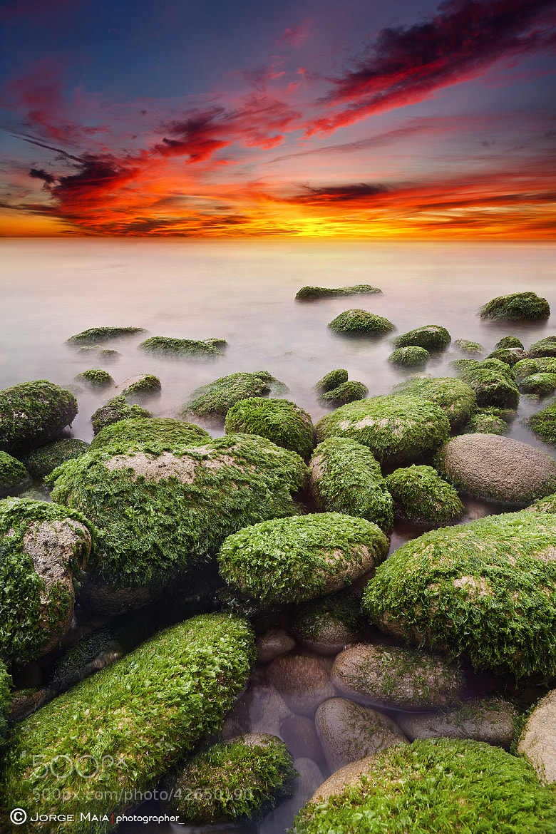 Photograph Till the end by Jorge Maia on 500px