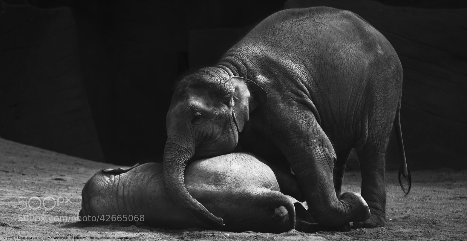 Photograph Don't die baby brother by K J on 500px