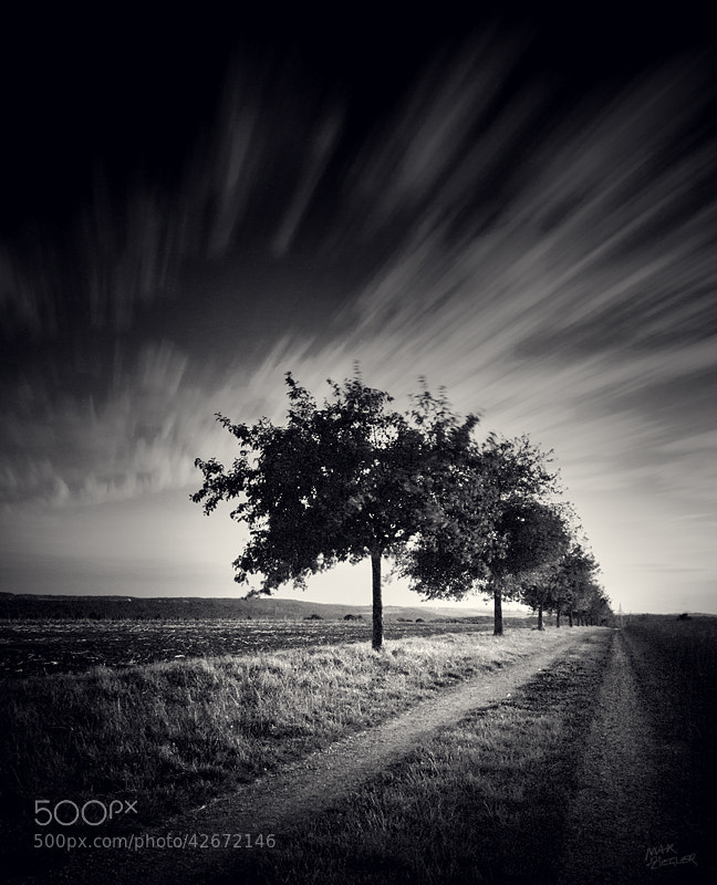 Photograph warm breeze b&w by Max Ziegler on 500px