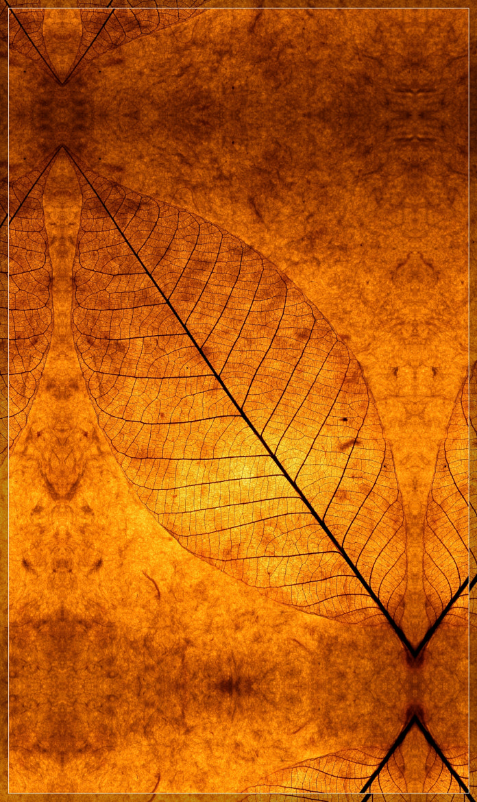 Photograph The magic of autumn by Milarepa Records on 500px