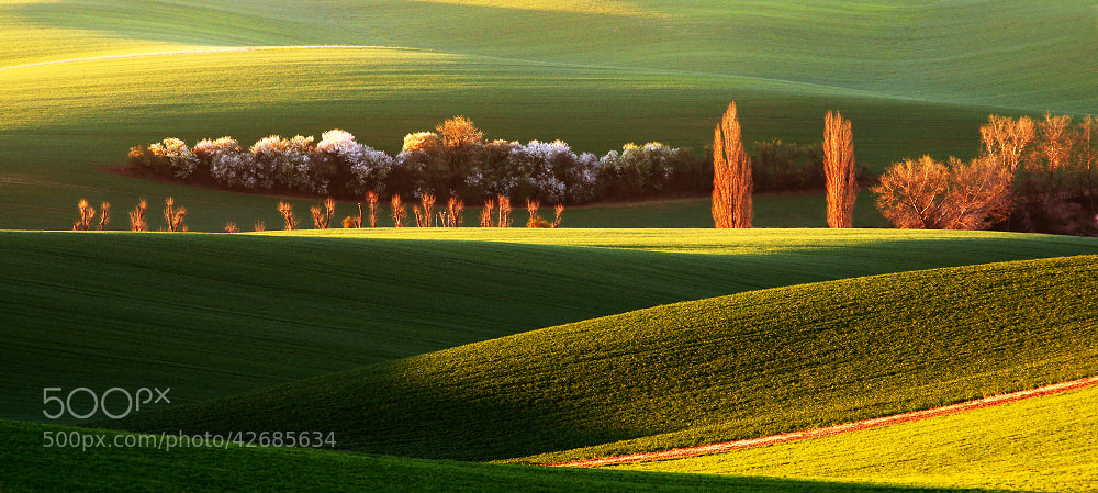 Photograph Spring Landscape by Radek Severa on 500px