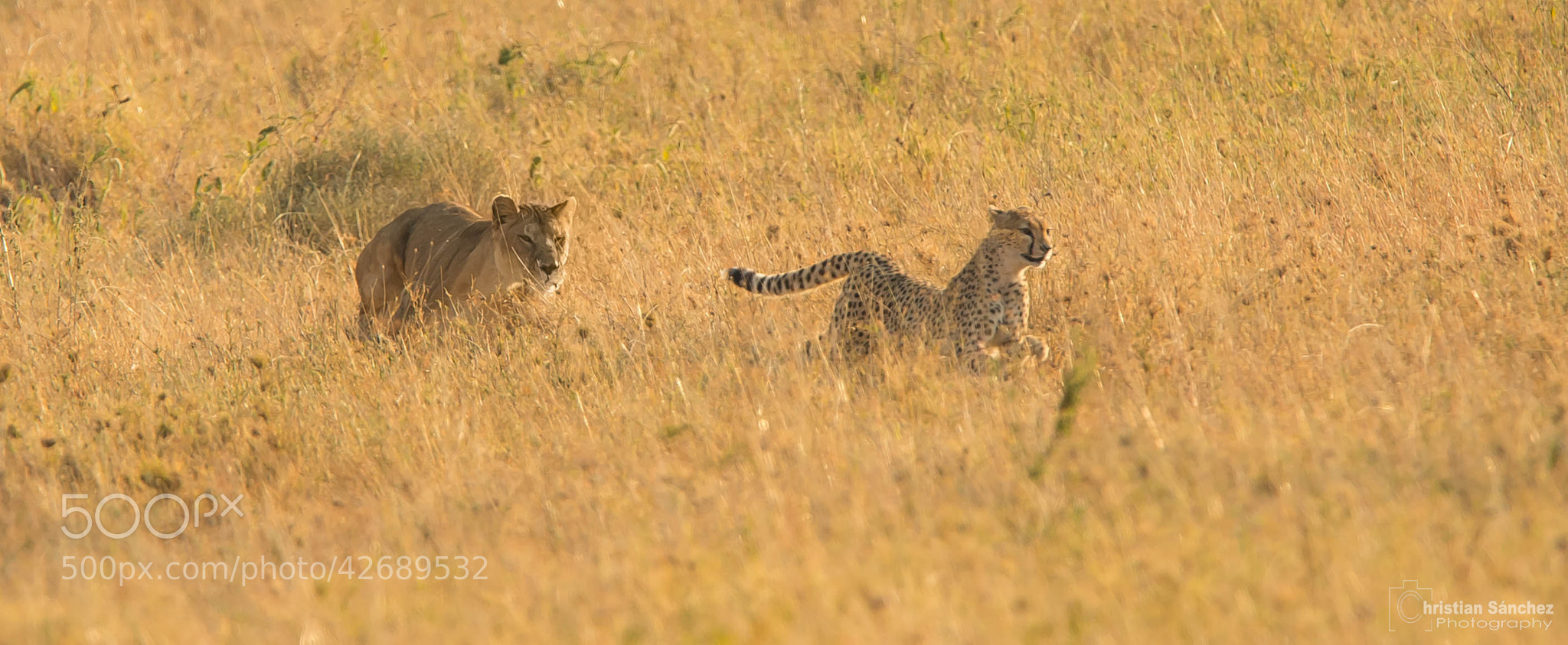 Photograph catch me if you can by Christian Sanchez on 500px
