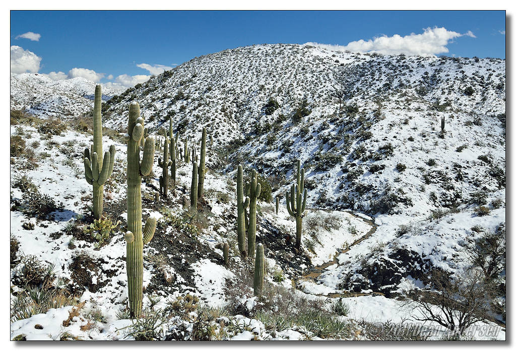 Photograph Saguaro Snow by Dean Andersen on 500px