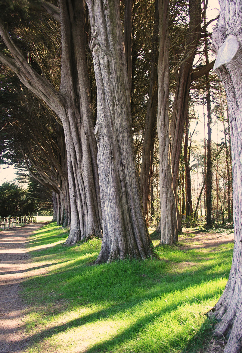 Photograph Magnificent Trees by Soumendra Chowdhury on 500px