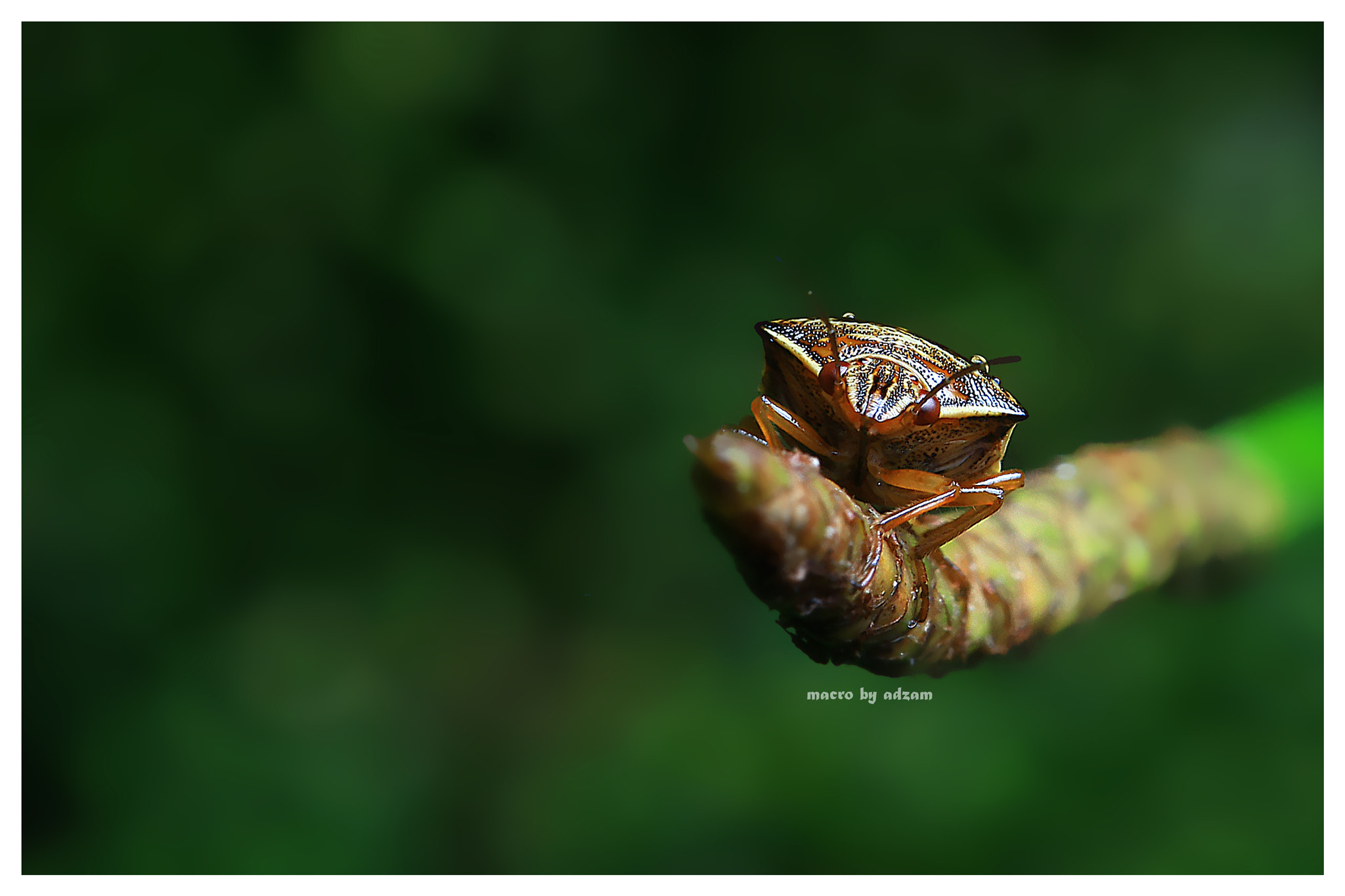 Photograph buggy by Wan Muadzam on 500px