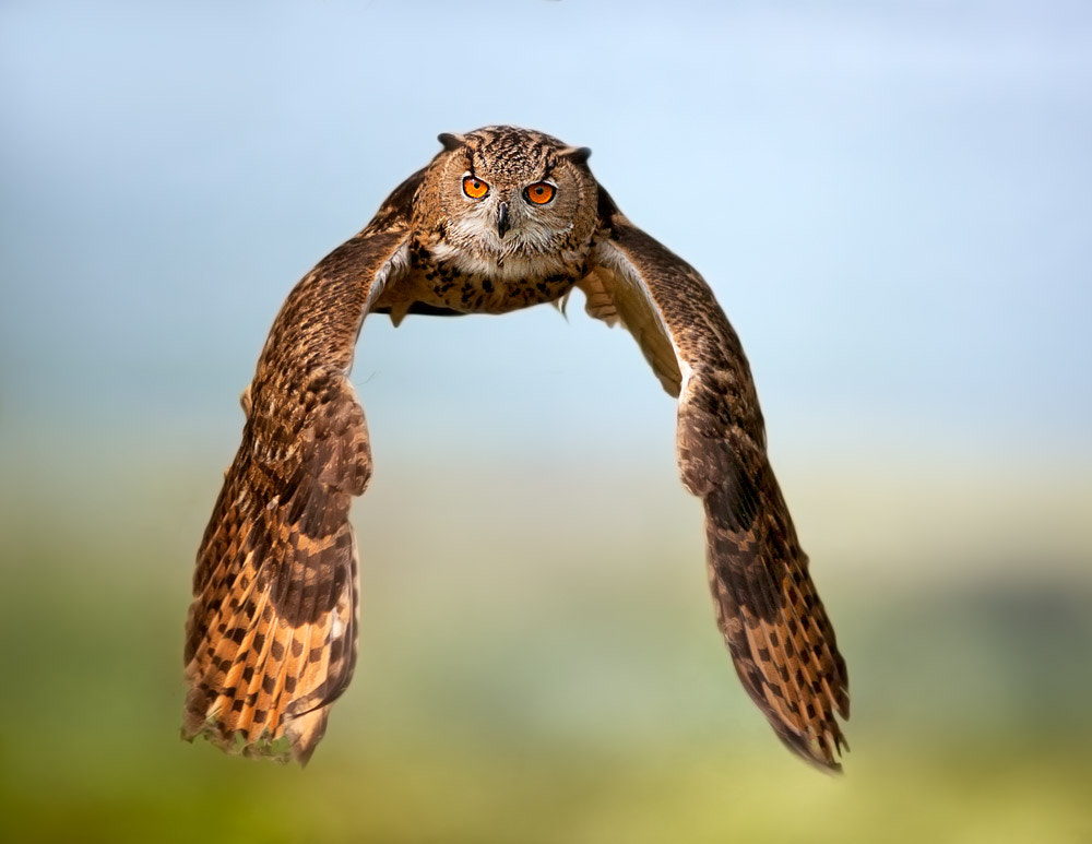 Photograph Fly by Stefano Ronchi on 500px