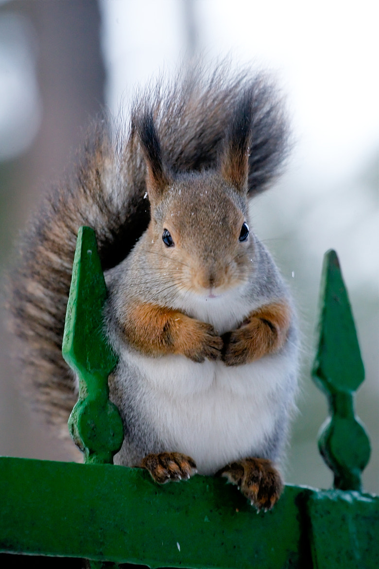 Photograph Waiting for nuts by Gleb Skrebets on 500px