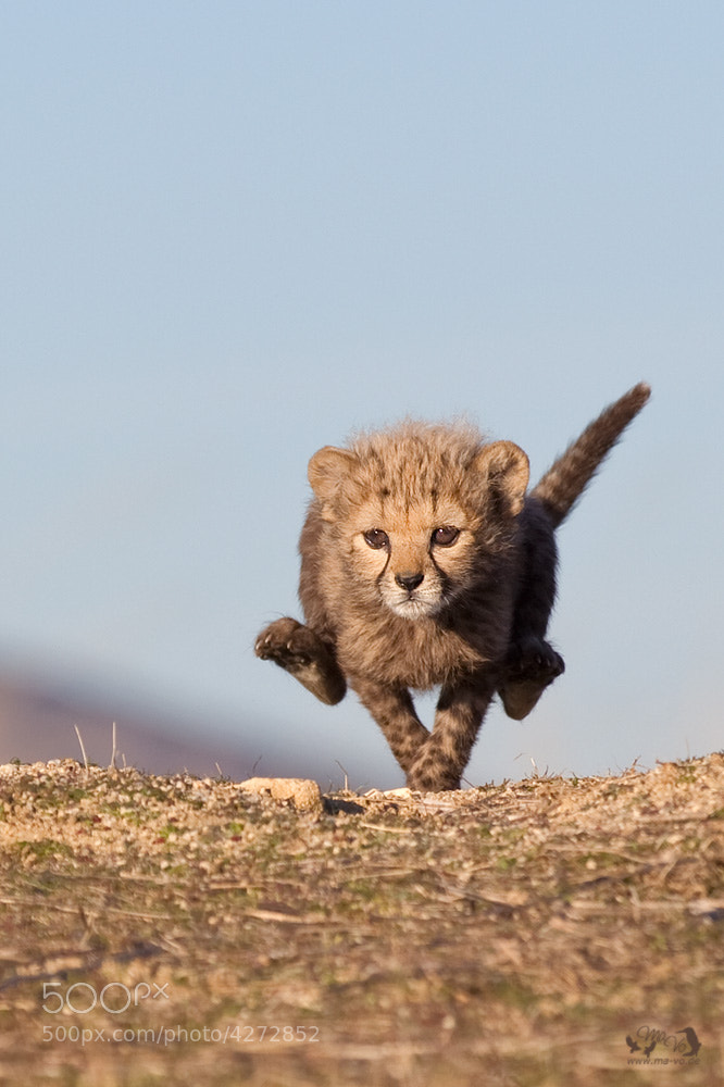 Photograph At full speed by Marion Vollborn on 500px