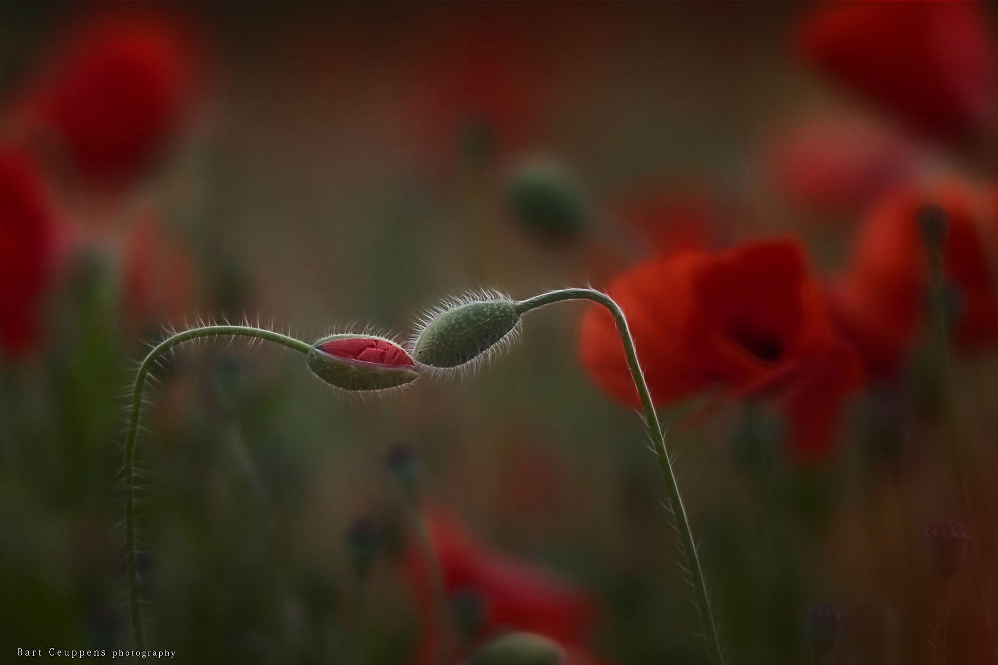 Photograph The kiss by Bart Ceuppens on 500px