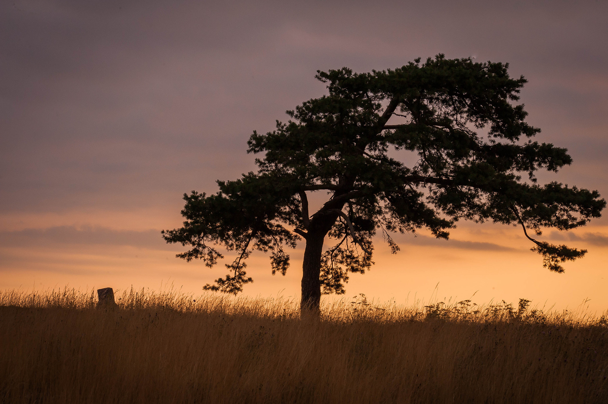 Photograph the tree on the top of the hill by serge vincent on 500px