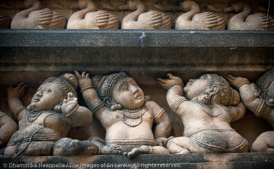 Photograph Untitled by Images of Sri Lanka / Dhammika Heenpella on 500px