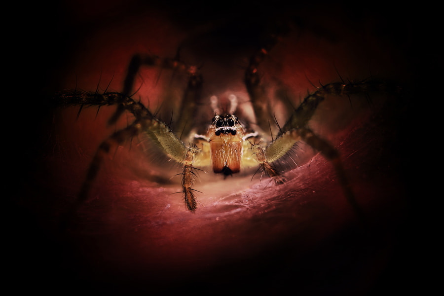 Photograph Mysterious Spidey by Arief Perdana on 500px