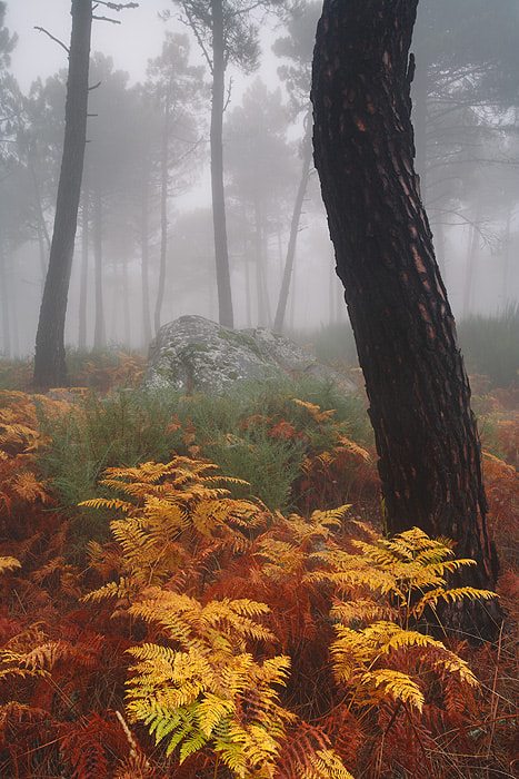 "Photograph "" Autumn Colors "" by Juan Pavon on 500px"