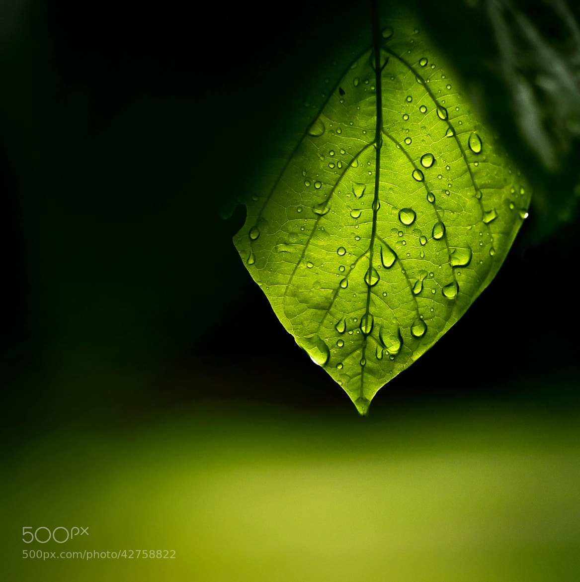 Photograph Dew Drop by Nidhin Bose on 500px