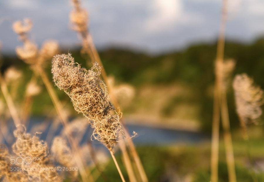 Photograph Kurashiki Dam Revisit (Long Grass) by David Edenfield on 500px