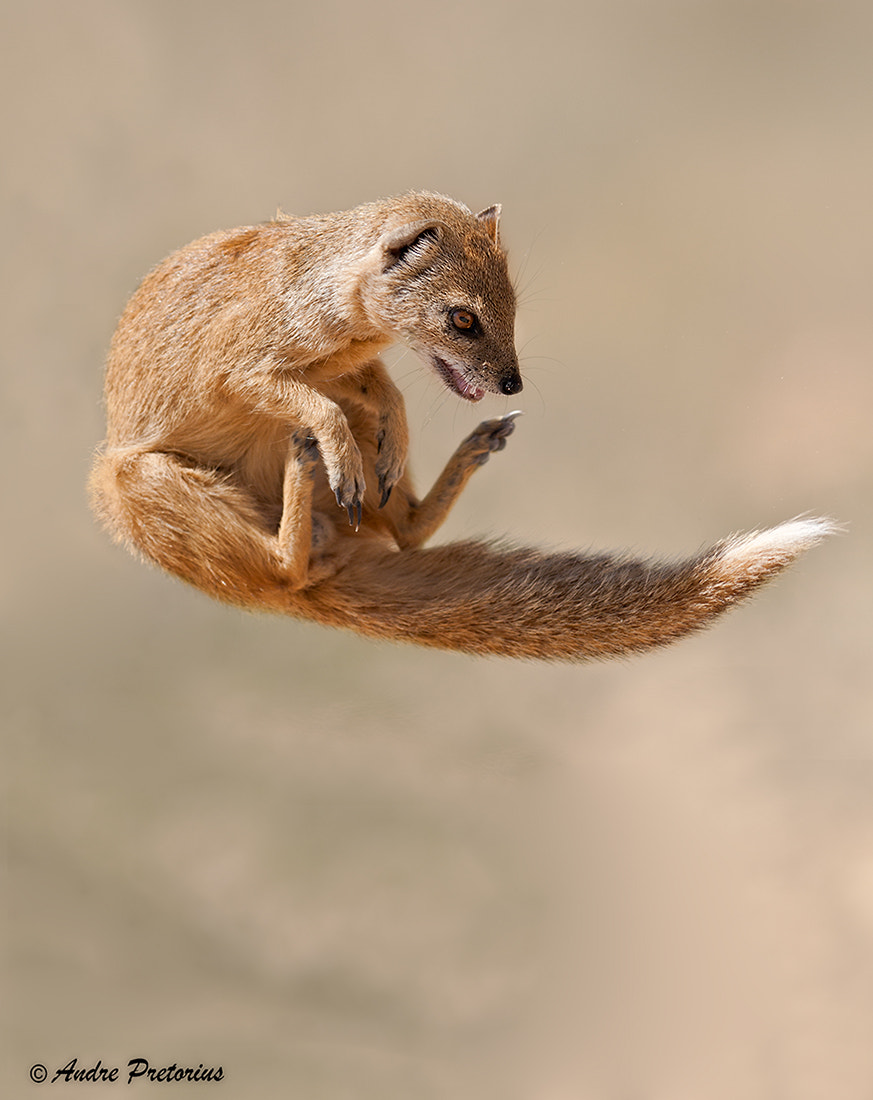 Photograph The Acrobat by Andre Pretorius on 500px