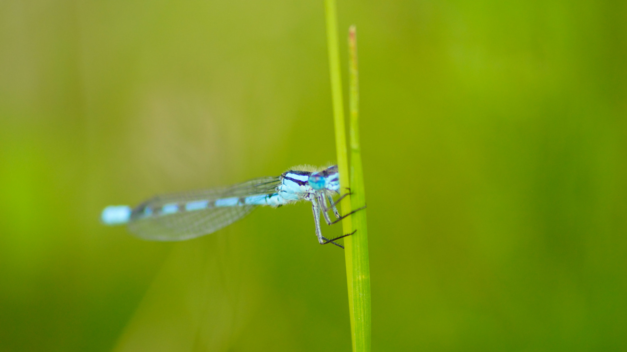 Photograph dragonfly in the wind by Ahmad A on 500px