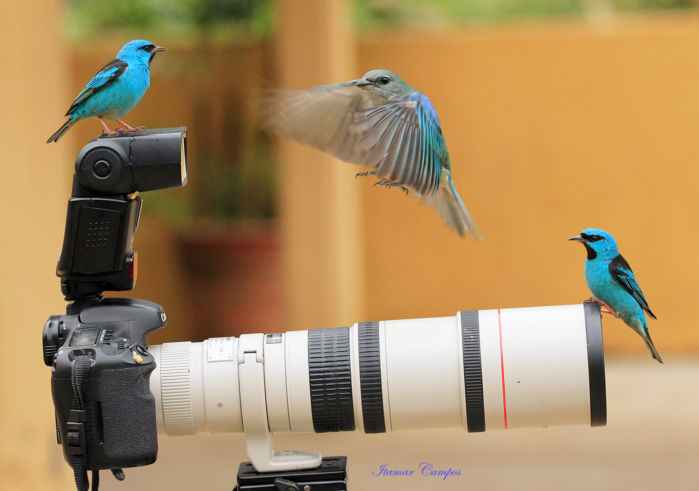 Photograph Landing approach II ! by Itamar Campos on 500px