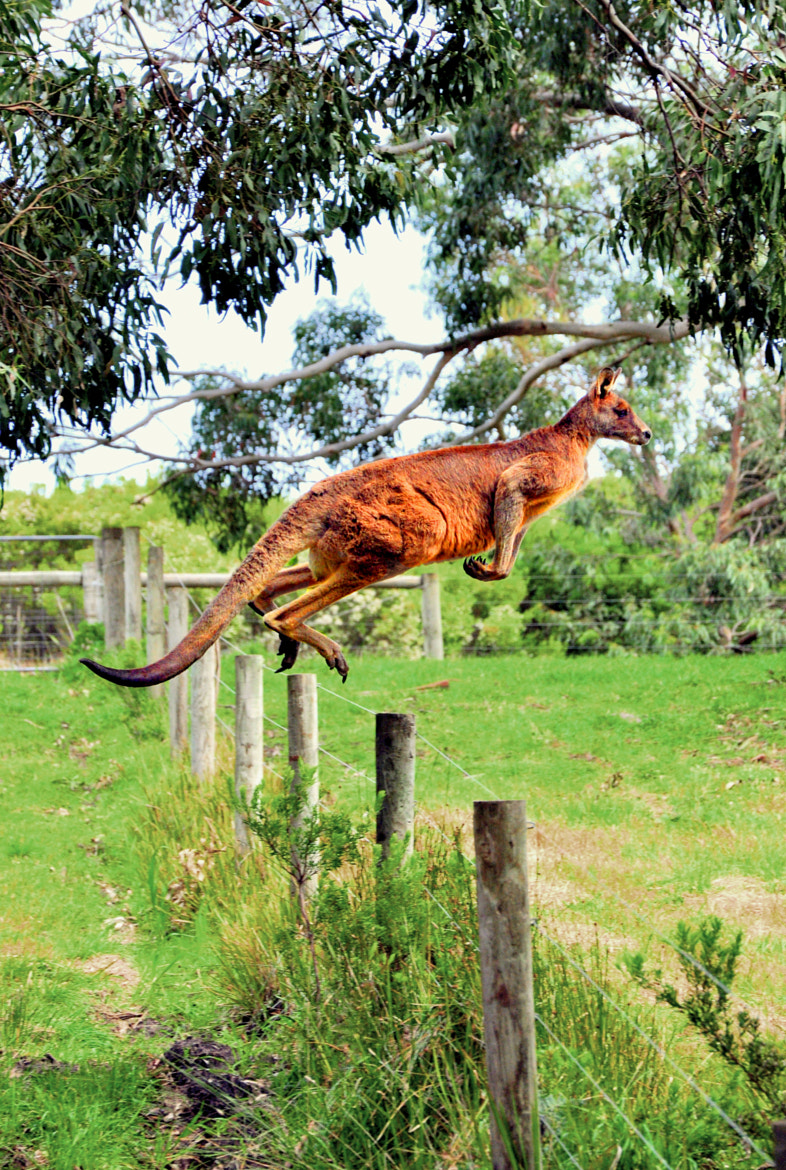 Photograph The Roo Jump by Vinod Krishnan on 500px