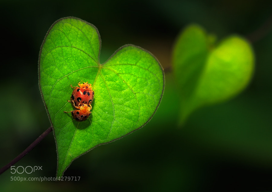 Photograph Love.. by Vincent Chung on 500px