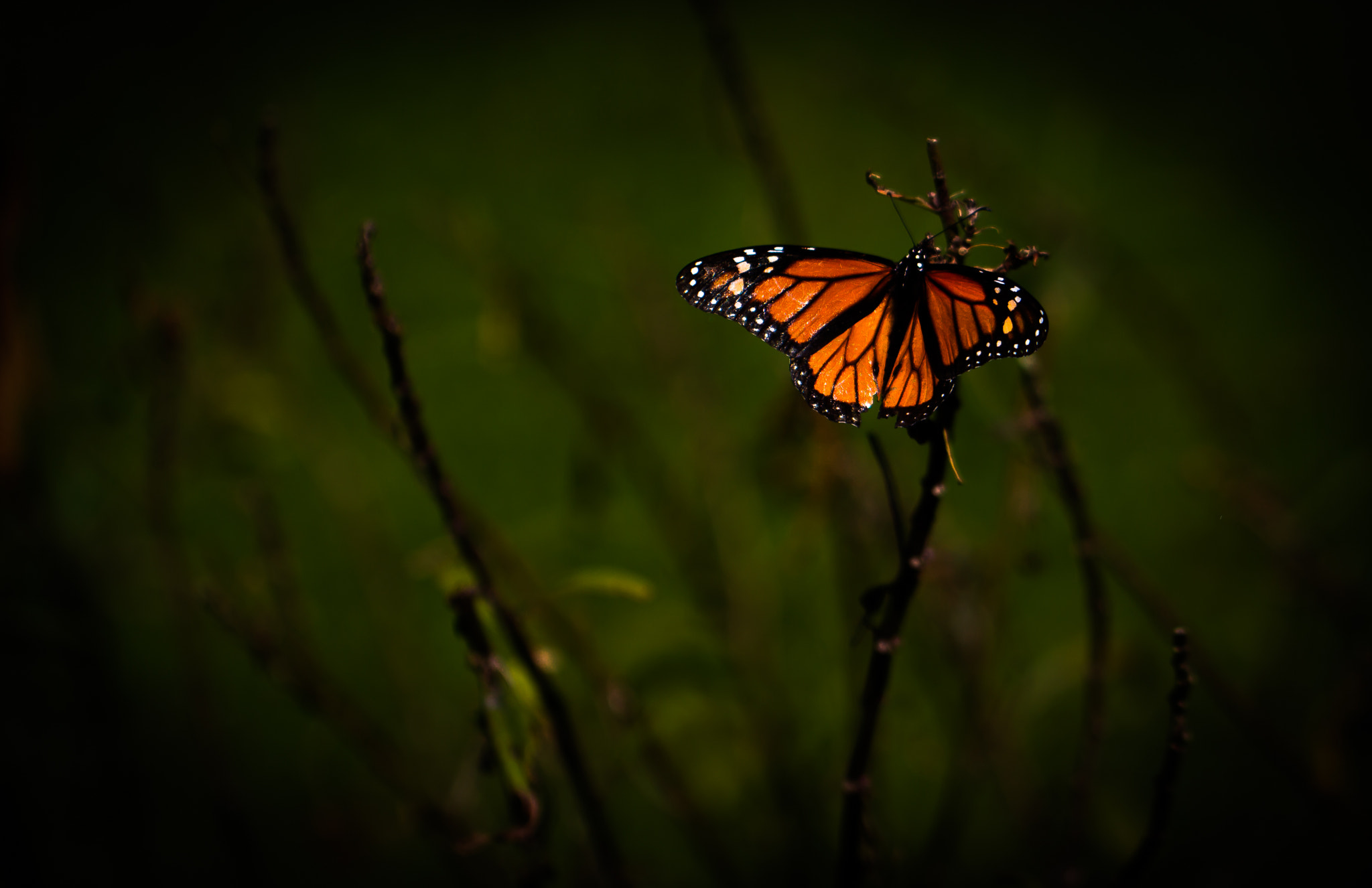 Photograph Butterfly in the dark by Cyndy Knudson on 500px