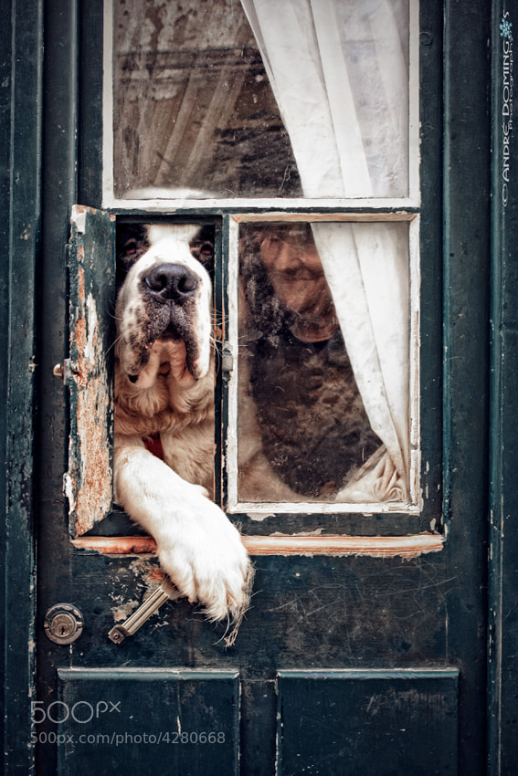 Photograph The doorkeeper by André  Domingos on 500px
