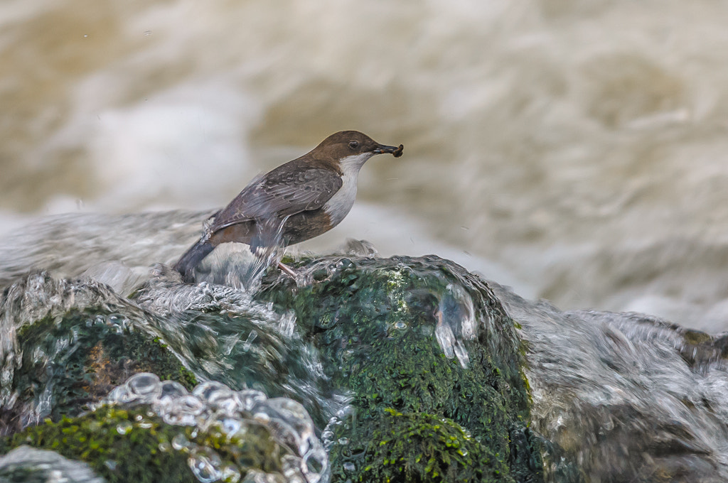 Photograph Dipper by Tomas Johansson on 500px