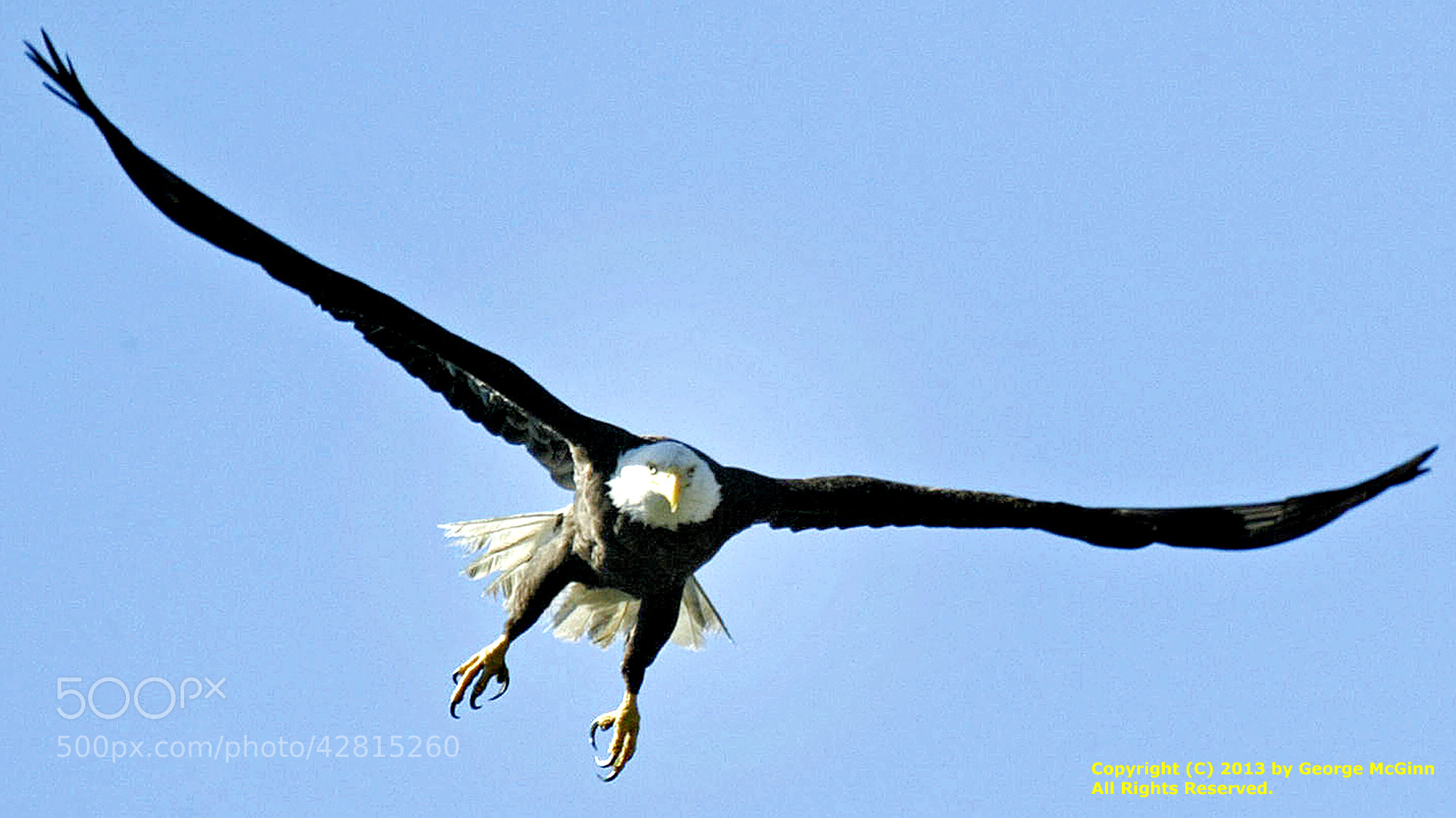 Photograph The Eagle Takes Flight (WILD) by George McGinn on 500px