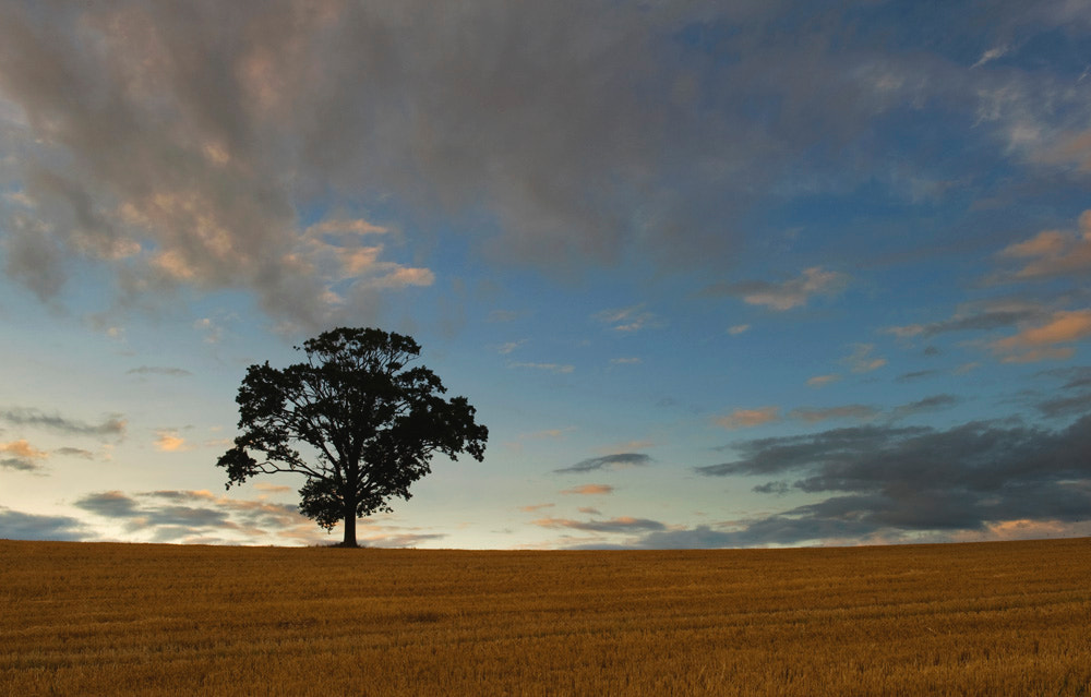 Photograph Lone Tree by Brian Walsh on 500px