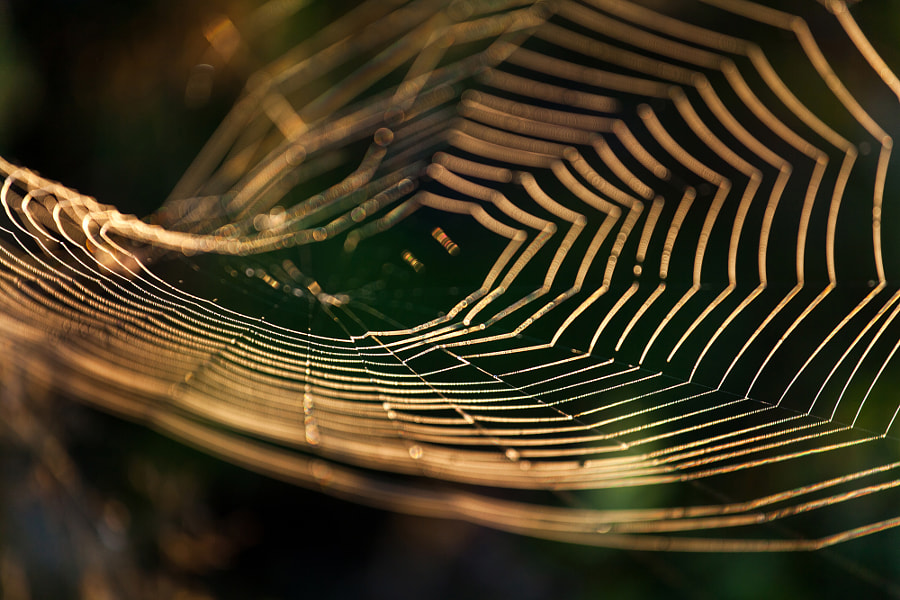 spider's web at dawn