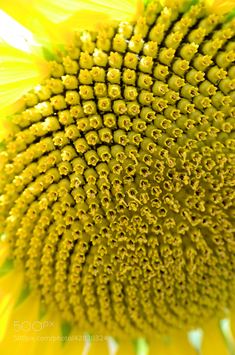 Photograph Going to seed by Heather Aplin on 500px