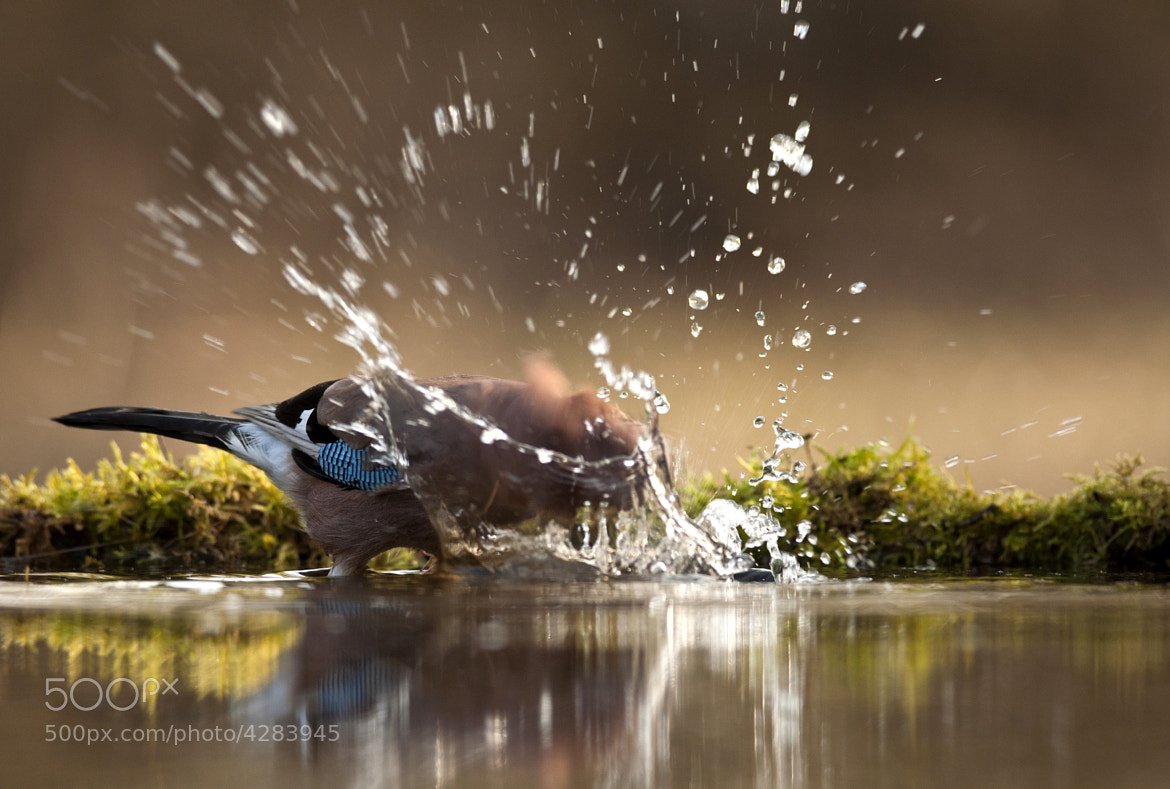 Photograph Splash by Csilla Zelko on 500px