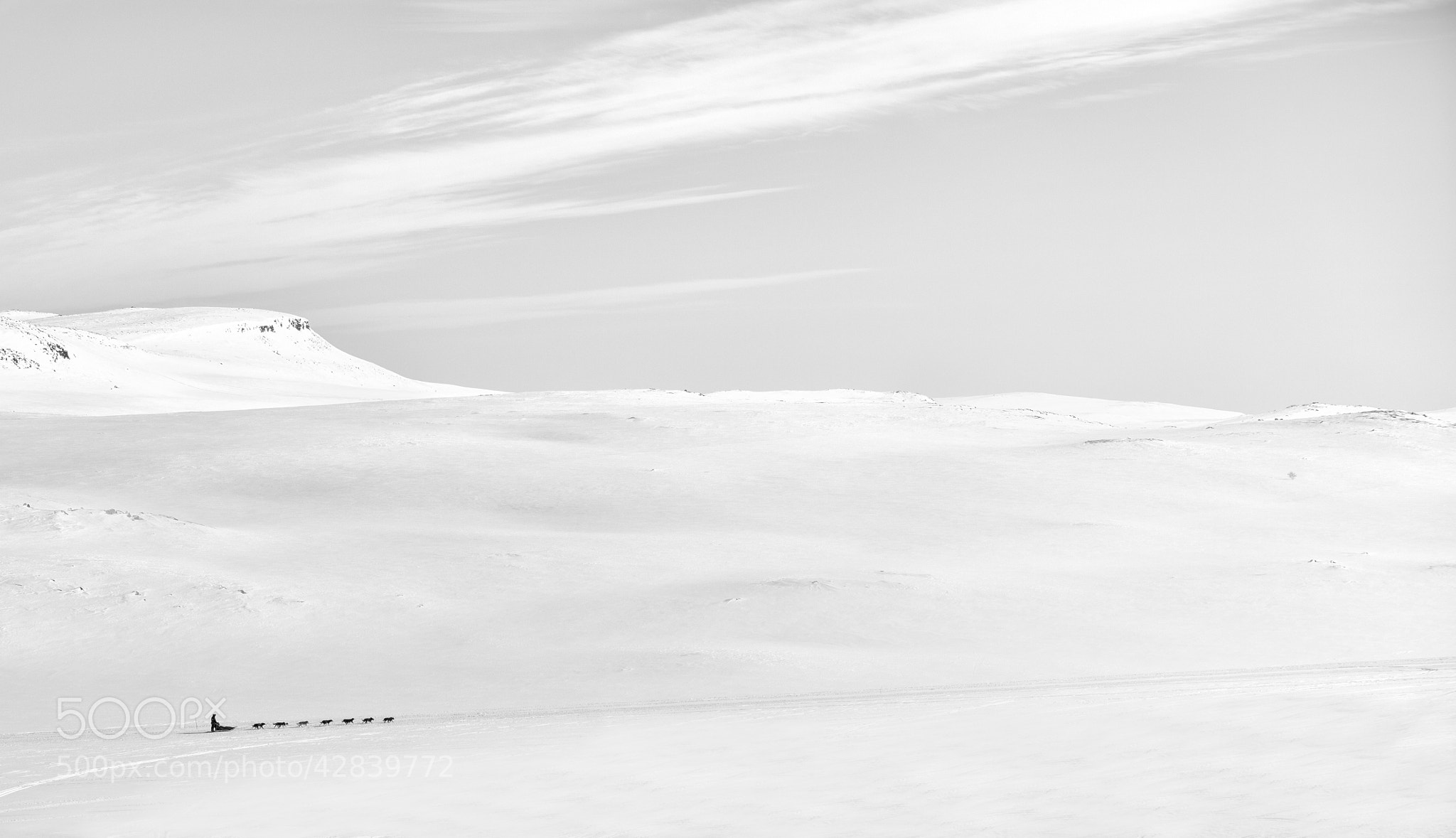 Photograph Sled dogs in the wilderness of Finnmark by Lene Thomassen on 500px
