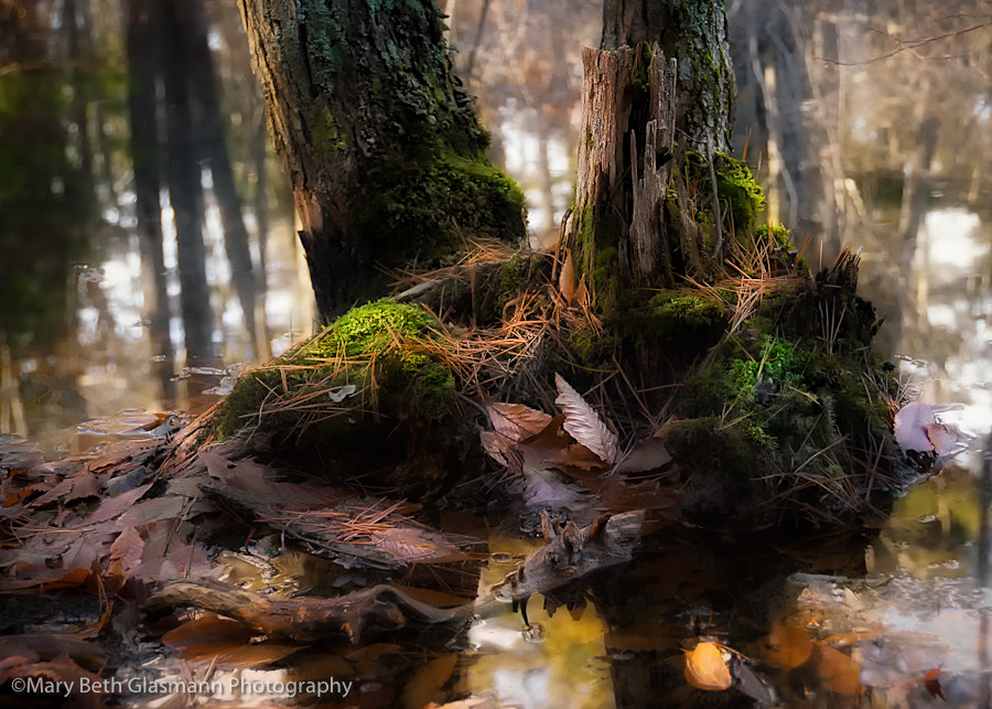 Photograph Untitled by Beth Glasmann on 500px
