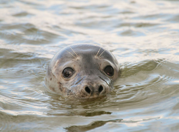 Photograph Seal by Carol Betteridge on 500px
