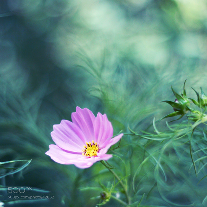 Photograph Cosmos by Jamin G on 500px