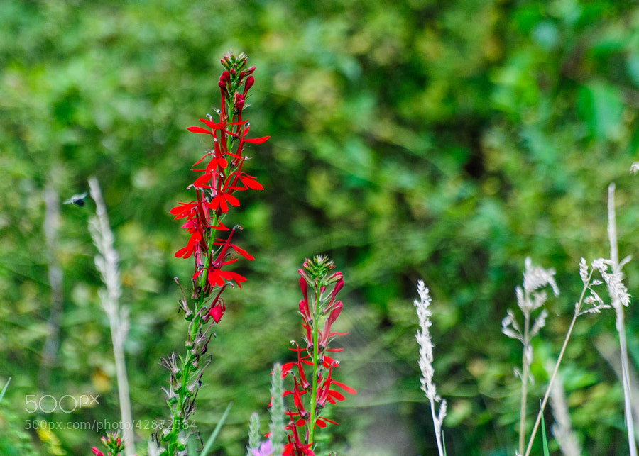 Walking through the woods, I noticed the two red flowers fighting to get noticed among all the green.  It worked.