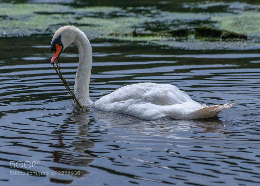 Life at the pond at Loantaka Park