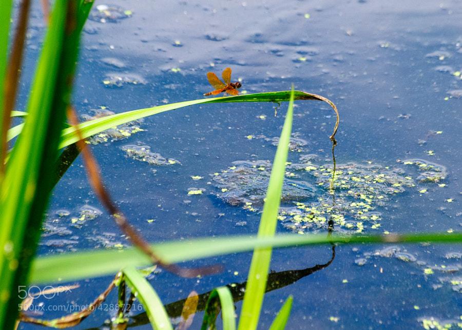 Pond at Loantaka Park