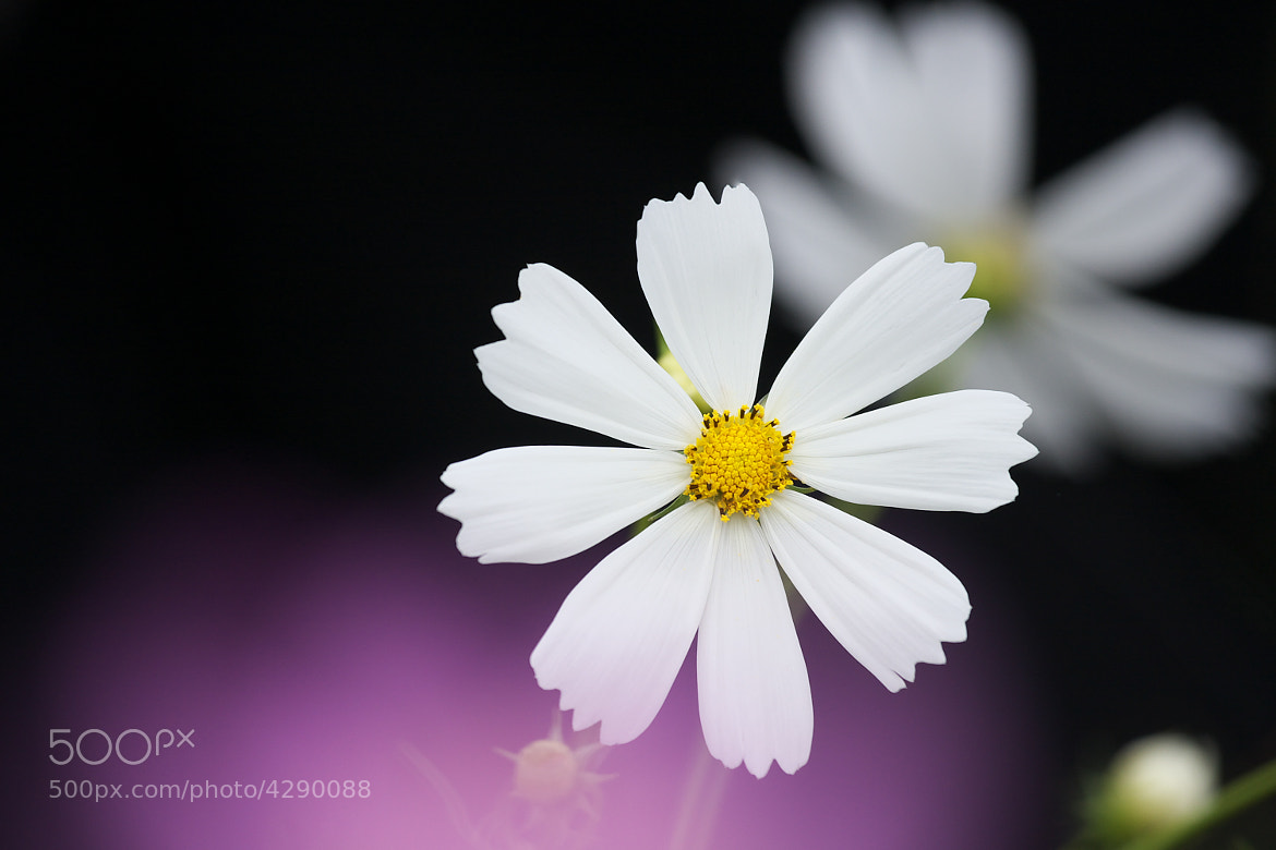 Photograph cosmos by Tashi Delek on 500px