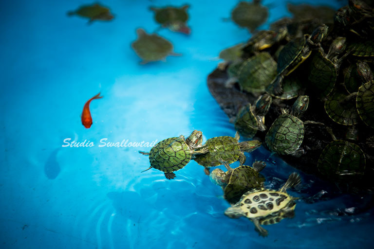 Photograph TURTLES by fuu jin on 500px
