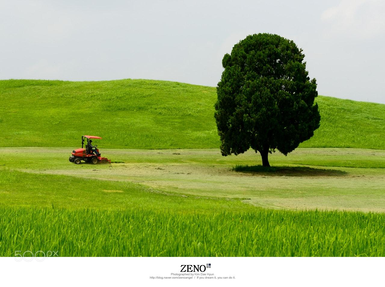 Photograph 서울 올림픽공원 외톨이 나무 by Kim DaeHyun on 500px