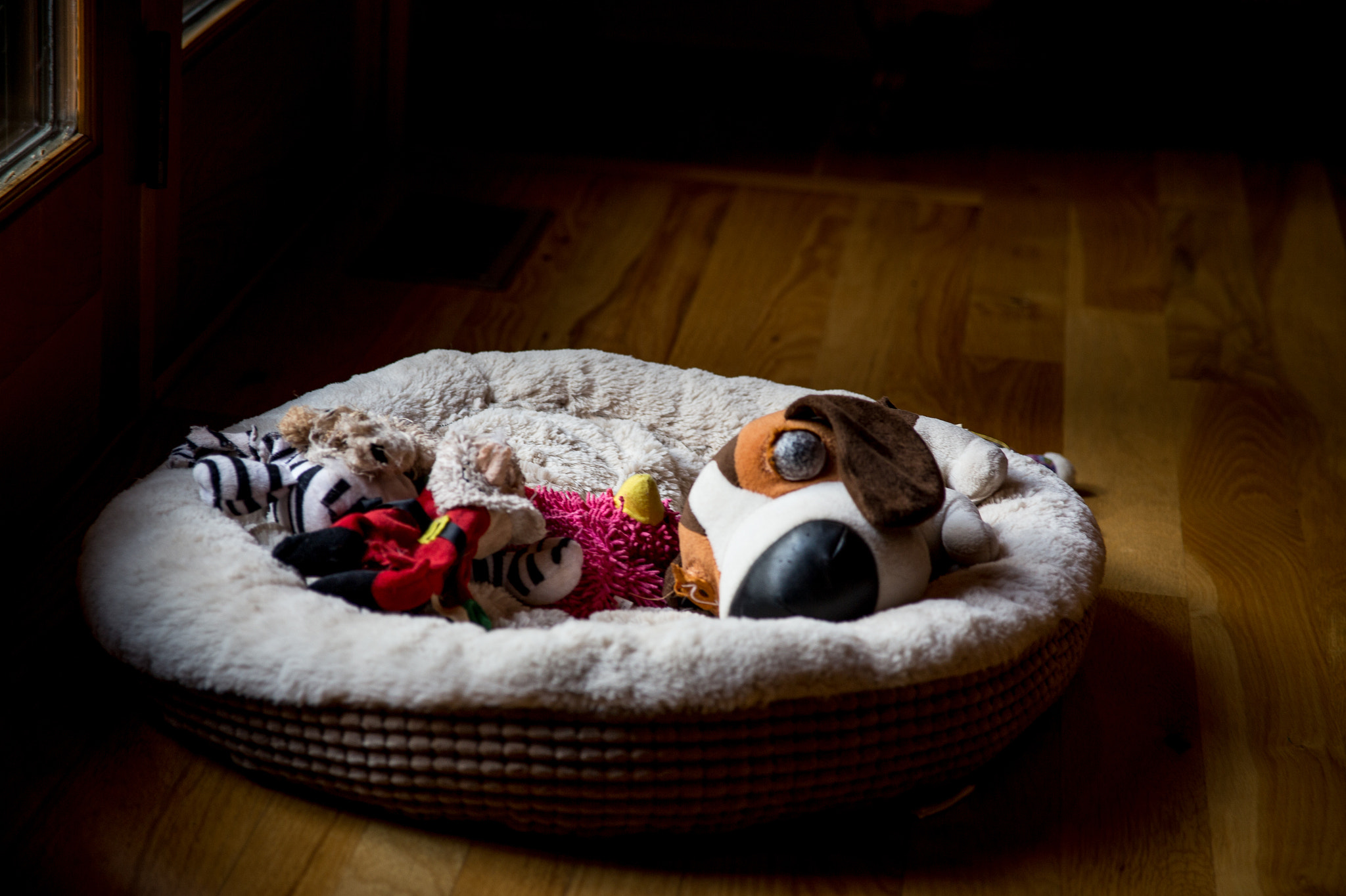 Photograph Maggie Mae's Dog Bed by LuAnn Hunt on 500px