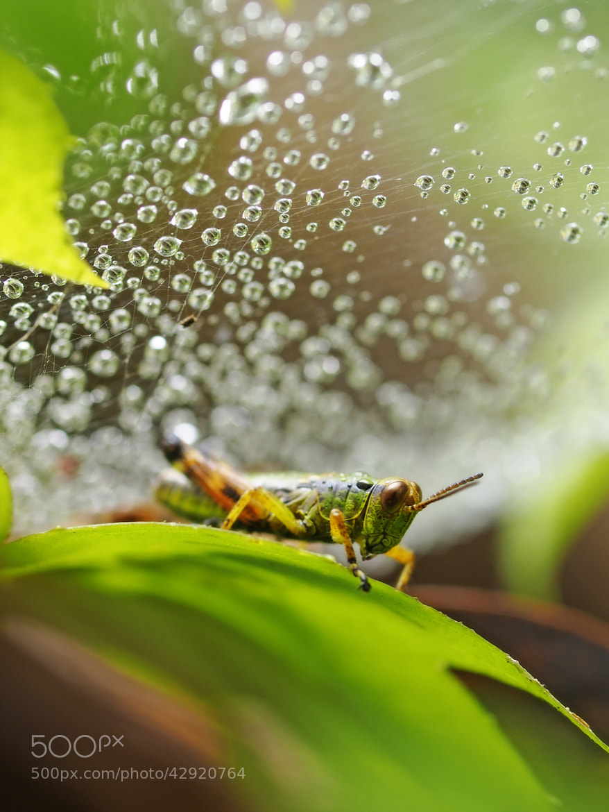 Photograph Under the drop by Haru Digital phot on 500px