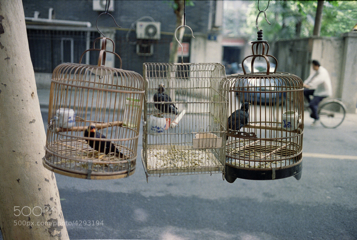 Photograph Birds in cages by Peter Zhao on 500px