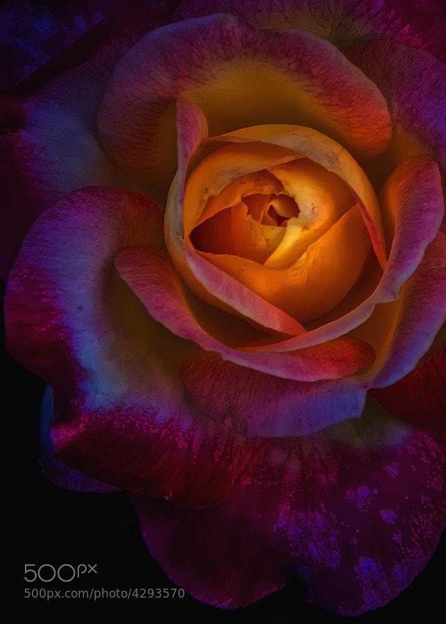 Whetsone Park of Roses