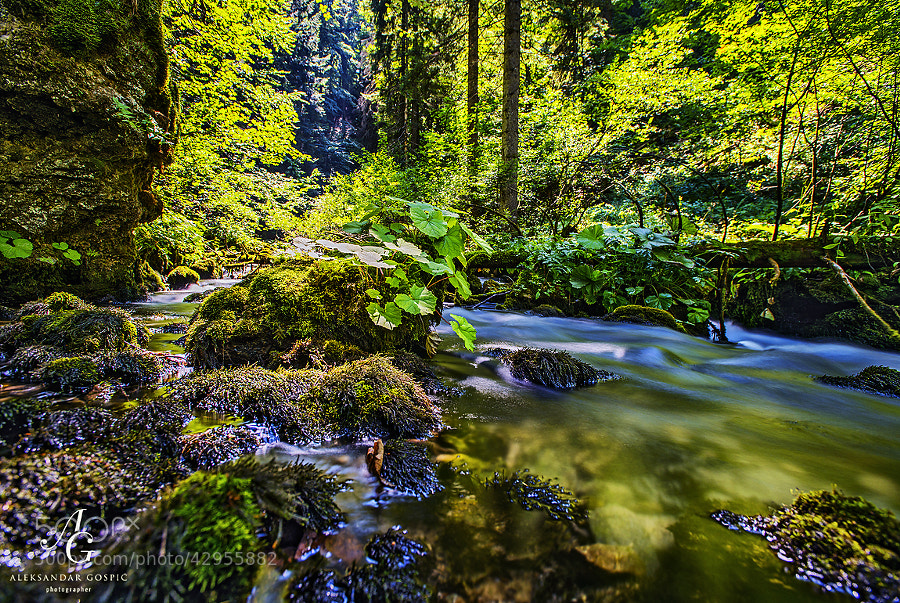 Deep in the Plitvice virgin forest, far away from the eyes of millions of annual visitors to the national park, Crna Rijeka (Black River) emerges on the surface, and there begins the story of Plitvice lakes