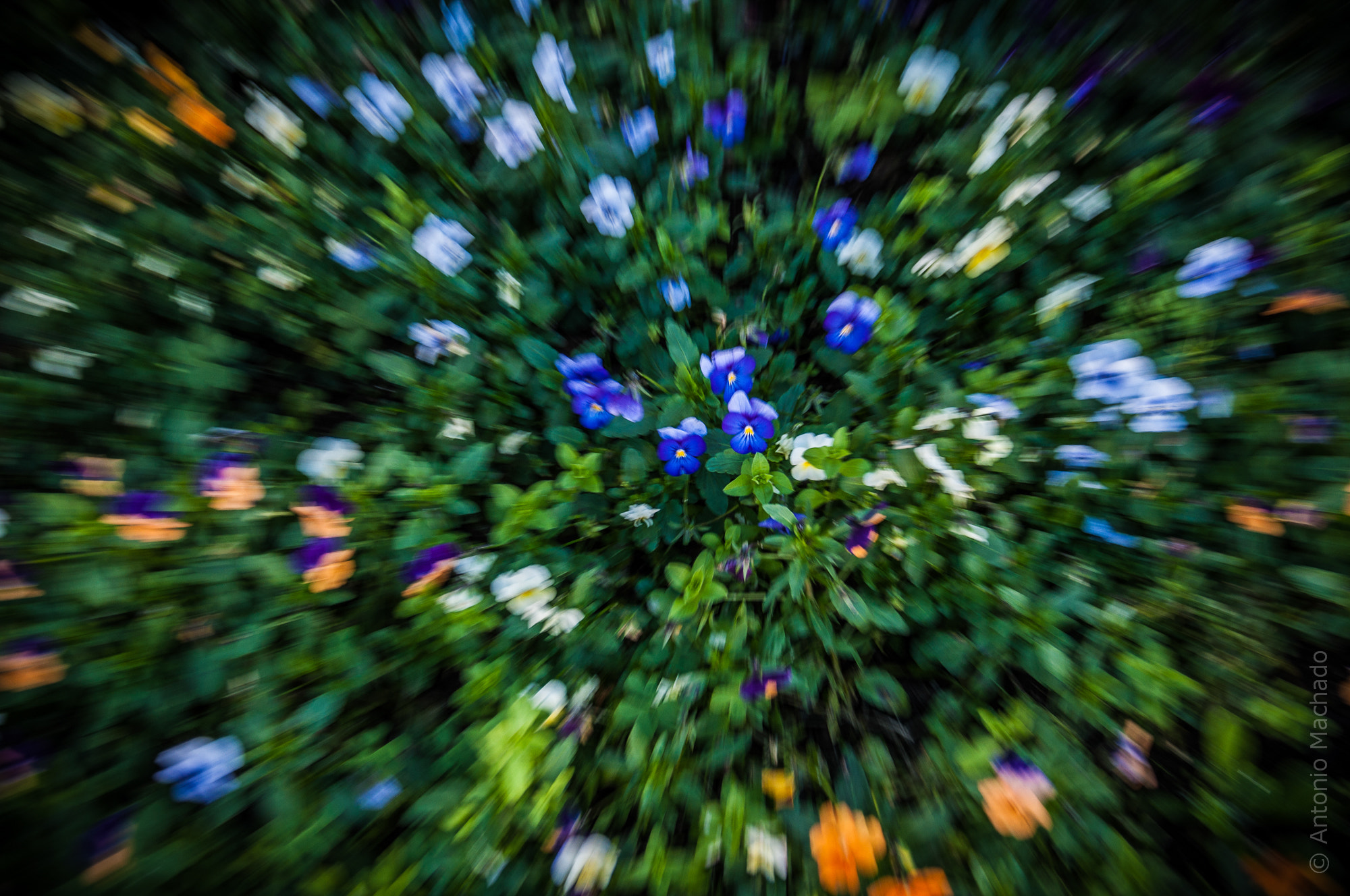 Photograph Flowers in motion by Antonio Machado on 500px